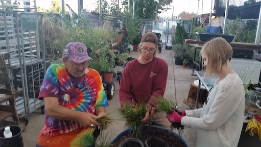 Home   DVC Horticulture